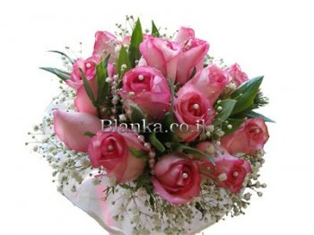 Roses pink and white Dulche Vita